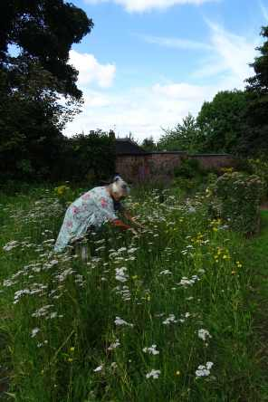 Barbara among the Yarrow and other wild herbs