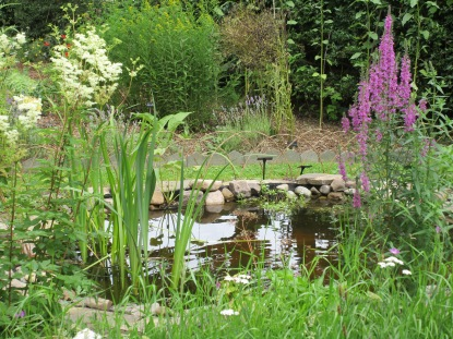 The Pond In Bloom!
