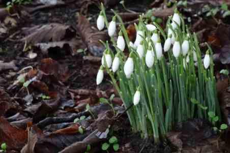 Harbingers of spring...